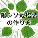 【自作で無限収穫】シソ・大葉水耕栽培装置の作り方@予算4,000円