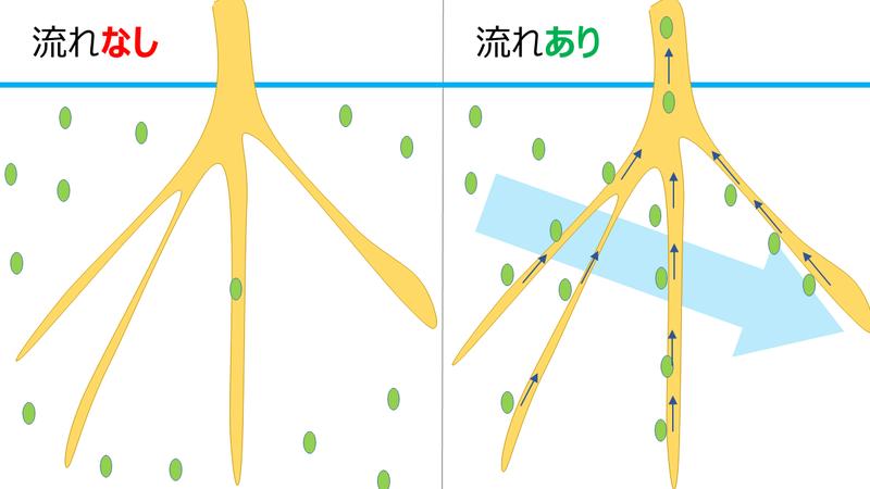 根の吸収比較