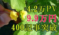 【201706ブログ運営報告】4.2万PV。茂りまくるゴーヤ!収益は9.9万円、400記事突破。