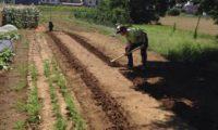 ベランダ農業は弱者のための農業。インドア派な君もできる!