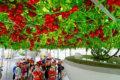 1つの苗からトマト1万個⁉︎ 水耕栽培≒ハイポニカ その驚くべき性能を紹介するぜ!
