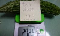 【脅威】8/7 近所のまいばすけっと 99円(税込) 鹿児島産 を買ってみた。