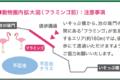 【イベントレポ】究極の朝活、上野の森ハーフマラソンは、本当に走っちゃダメだった。