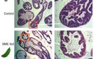 【癌予防・治療】ゴーヤは本当に前立腺癌がんに効くのか? 出典元の英語論文をガチで読み込んでみた。